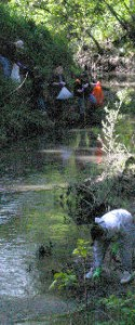 Arcade Creek 2005